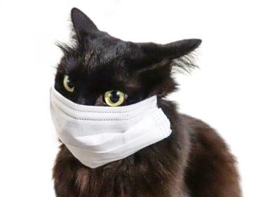 シャープマスクも原価マスクも買えない!なんとマスクが商店街で買えるという噂がある?